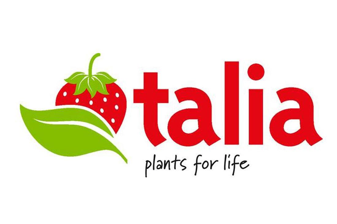 Талия - земляника садовая/клубника - купить саженцы/рассада фриго, сорт Talia G14527